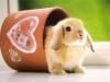 Anonymous-Rabbit-33665